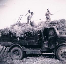 1940's war effort - farm work
